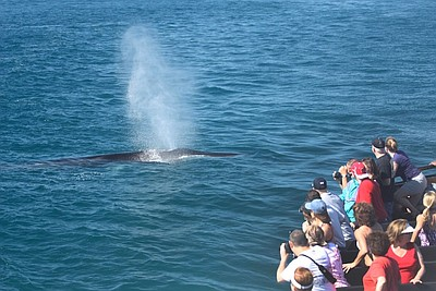 Photo of people whale watching on one of Flagship's cruises.