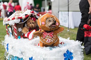 Promotional photo courtesy of the Holiday Pet Parade.
