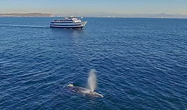 Promo graphic for San Diego Summer Whale Watching Adven...