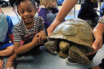 Kids interact with a tortoise at the Living Coast Discove...