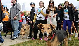 Promotional photo for the Walk For Animals - North County...