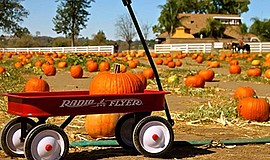 Promotional photo for the pumpkin patch. Courtesy of the ...