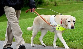 Promo graphic for Is A Guide Dog Right For You?