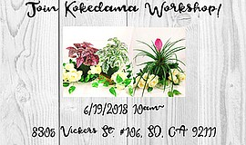 Promo graphic for Kokedama Moss Ball Workshop