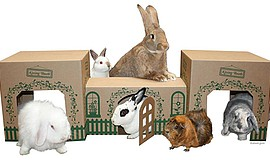 Promotional photo of rabbits. Courtesy of San Diego House...
