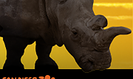 Graphic for San Diego Zoo Safari Park