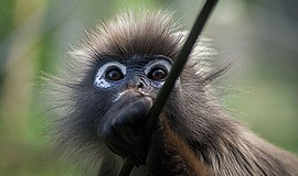 Promotional photo of a primate for the 'Morality Without ...