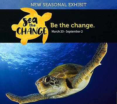 "Promotional graphic for ""SEA the Change"". Courtesy of Liv..."