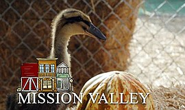 Promotional graphic for Mission Valley location. Courtesy...