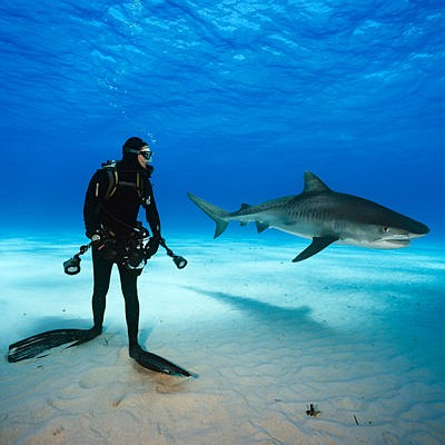 Promotional photo of a diver with a shark. Courtesy of La...