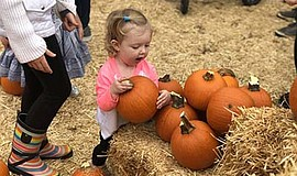 Promotional photo for the Pumpkin Patch At Bates Nut Farm