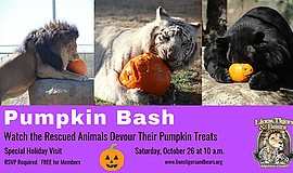 Promotional photo for the Pumpkin Bash at Lions Tigers & ...