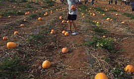 Promotional photo of Rancho Bernardo Pumpkin Station. Cou...