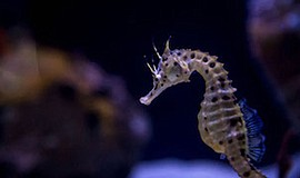 Promo graphic for Growing Up Seahorse - Behind-the-Scen...