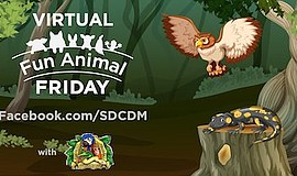 Promotional graphic for Virtual Fun Animal Friday. Courte...