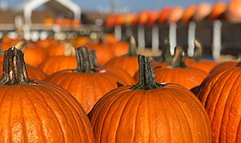 Promotional photo of the Carlsbad Pumpkin Patch at Carlsb...