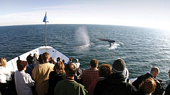 Promotional photo for Hornblower Winter Whale Watching Tours. Courtesy of Hor...