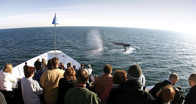Promotional photo for Hornblower Winter Whale Watching To...