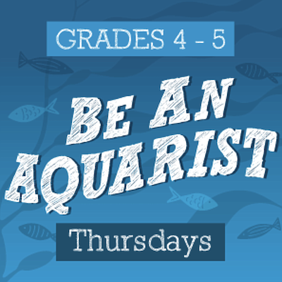 Promotional photo for Be An Aquarist Virtual After School...