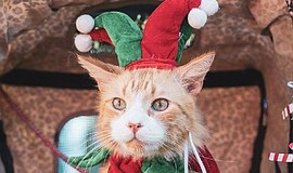 Promotional photo of a cat dressed in a holiday costume. ...