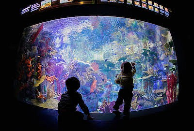 Promotional photo of kids looking at an aquarium during a...