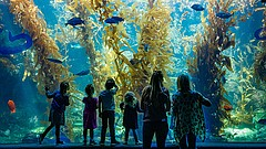 Promotional photo for Birch Aquarium