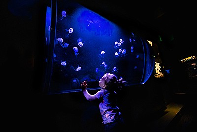 Promotional photo for the New Moon Jelly experience at Bi...