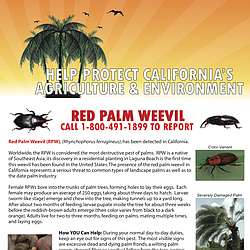 Report Palm Weevils