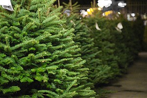 San Diego Gives Christmas Trees Second Life