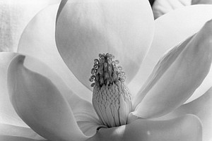 The Life And Photography Of Imogen Cunningham