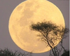 Scientists Call Supermoon Link To Natural Disasters Loony
