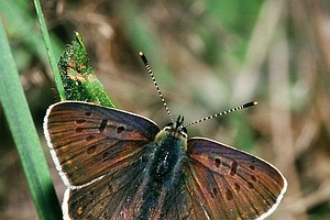 Tease photo for No Fed Protection For Rare Butterfly