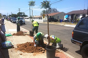 Tease photo for San Diegans Need More Trees In The City