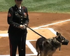 Yankees Honor Camp Pendleton Military Dog Sgt. Rex (Video)