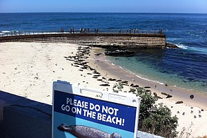 La Jolla Children's Pool Rope Meant To Protect Seals Remo...