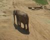 205-Pound Elephant Born At San Diego Zoo