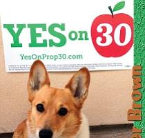 Tease photo for Governor Brown's Dog To Visit San Diego, Promote Prop 30