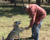 Homeless Veteran Reunites With Dog Missing Two Months (Video)