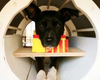 Pentagon To Use Brain Scans To Recruit Military Dogs?