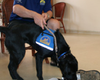 Tease photo for Ten More Service Dogs Graduate From Oceanside Program