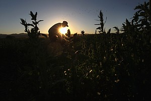 Tease photo for San Diego Farmers Bracing For A Tough Year