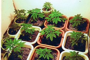 Filner 'Disappointed' With City Council's Medical Marijua...