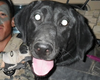 Camp Pendleton Marine To Honor Fallen Military Dog 'Cpl. Tick'