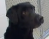 Dogs With PTSD Get Help From Military Veterinarian (Video)