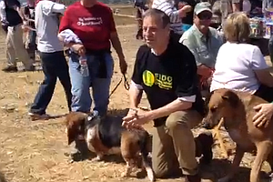 Tease photo for Filner Promises To Keep Fiesta Island Dog Park Intact