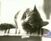 Tease photo for Family Cat Killed By Military Artillery, Government Sued (Video)