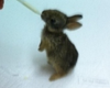 Video Of Camp Pendleton Corpsman Saving Baby Bunnies Goes...