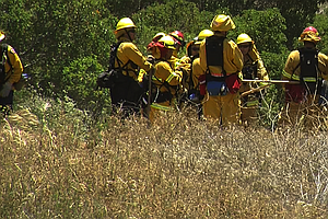 Tease photo for San Diego Fire Officials Keeping Close Watch On Record-Dry Vegetation