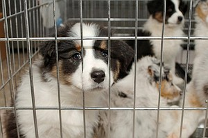 Tease photo for City Council Gives Final Approval On Retail Pet Ban, Parking Restrictions