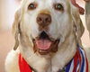 Tease photo for Best of Home Post: Ex-Military Dog Gabe, 2012 Hero Dog, Dies (+Video)